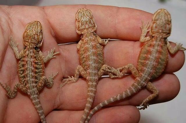 fostering teamwork lizards in hand.jpg