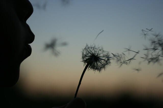 letting go dandelion wish.jpg