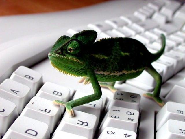 lizard computer technology email.jpg