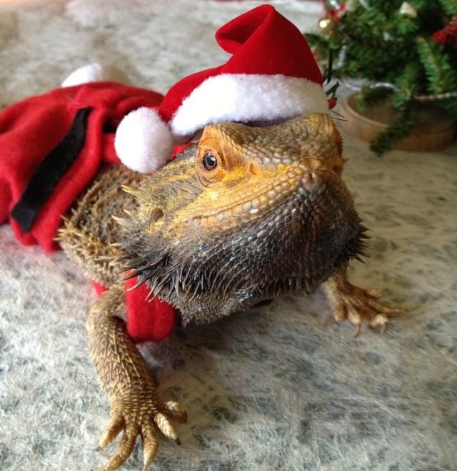 the lizard and traditions santa lizard.jpg